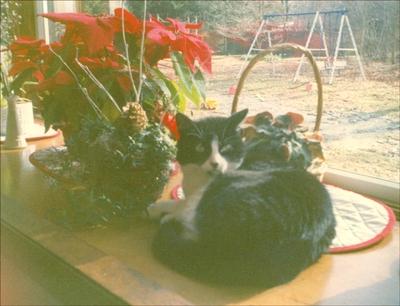Cat_n1